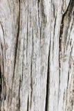 Houten textuur met barsten stock fotografie