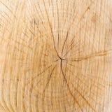 Houten textuur met de groeiringen Stock Afbeeldingen