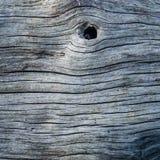 Houten textuur met knoop Stock Fotografie