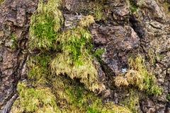 Houten textuur met mos royalty-vrije stock foto's