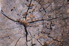 Houten textuur van gesneden boomboomstam Royalty-vrije Stock Afbeelding