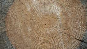 Houten textuur van gesneden boomboomstam stock afbeelding