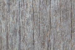 Houten textuur van macro Stock Afbeelding