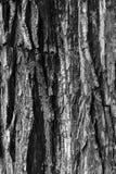 Houten Textuur zwart wit Als achtergrond Royalty-vrije Stock Foto