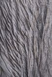Houten textuurachtergrond Bruine houten textuur, oude houten textuur stock foto