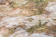 Houten textuurmacro royalty-vrije stock afbeelding