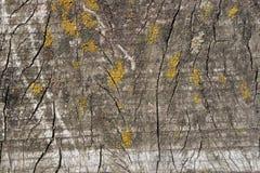 Houten textuurpaddestoel Royalty-vrije Stock Afbeeldingen