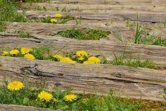 Houten trap en paardebloemen Stock Afbeelding