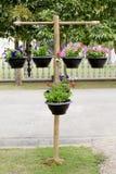 Houten tribune met potten van bloemen Royalty-vrije Stock Afbeelding