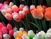 Houten tulpen Stock Afbeelding