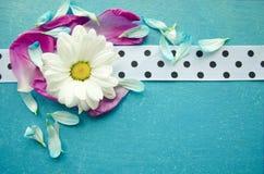 Houten turkooise oppervlakte met kamille, kleurrijke bloembloemblaadjes en wit bevlekt lint Royalty-vrije Stock Foto