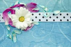 Houten turkooise oppervlakte met kamille, kleurrijke bloembloemblaadjes en wit bevlekt lint Stock Afbeeldingen