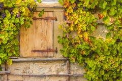 Houten valdeur en wijnstokken Stock Afbeelding