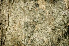 Houten van de boomtextuur patroon als achtergrond Royalty-vrije Stock Foto's