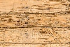 Houten vernietigde termieten Voor de achtergrond Stock Fotografie