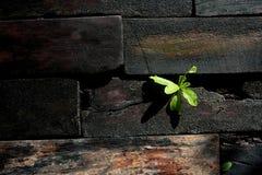 Houten vloer met weinig boom stock fotografie