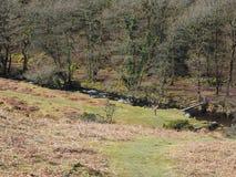 Houten voetgangersbrug bij de bodem van een vallei van bomen over een snel stromende stroom die over rotsen, Dartmoor draperen Royalty-vrije Stock Afbeelding