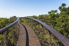 Houten voetgangersbrug boven bomen in de botanische tuin van Kirstenbosch, Cape Town royalty-vrije stock afbeeldingen