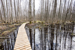 Houten voetgangersbrug in het moeras Royalty-vrije Stock Foto's
