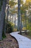 Houten voetpad bij eiken bos Stock Foto