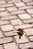 Houten vogel Royalty-vrije Stock Afbeelding