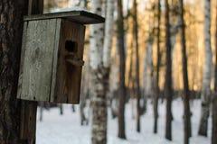 Houten vogelhuis die op de boom bij de winter overhandigen stock afbeeldingen