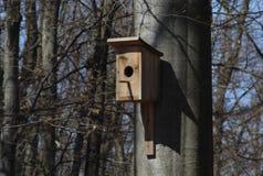 Houten vogelhuis op een beukboomstam in het bos Royalty-vrije Stock Afbeeldingen