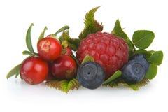 Houten vruchten Stock Afbeelding