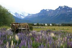 Houten wagen die door mooie lupines wordt omringd Royalty-vrije Stock Afbeelding