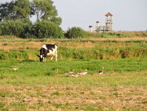 Houten watchtower, gans en koe, Litouwen stock afbeelding