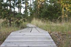 Houten weg door bos Royalty-vrije Stock Foto