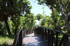 Houten weg door de groene wildernis aan het blauwe overzees Stock Fotografie