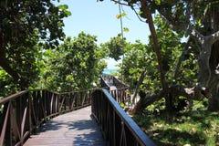 Houten weg door de groene wildernis aan het blauwe overzees Stock Afbeelding