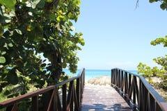 Houten weg door de groene wildernis aan het blauwe overzees Stock Foto