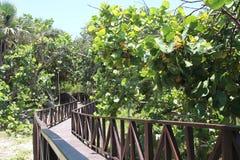 Houten weg door de groene wildernis aan het blauwe overzees Royalty-vrije Stock Afbeelding