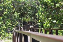 Houten weg door de groene wildernis aan het blauwe overzees Royalty-vrije Stock Foto's