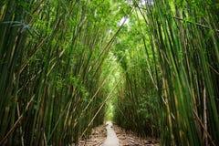 Houten weg door dicht bamboebos, die tot beroemde Waimoku-Dalingen leiden Populaire Pipiwai-sleep in het Nationale Park van Halea stock foto
