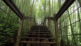 Houten weg door nevelig bamboe groen bos op Alishan-wandelingsgebied, ruitai historische sleep in Taiwan stock video