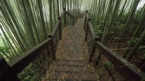 Houten weg door nevelig bamboe groen bos op Alishan-wandelingsgebied, ruitai historische sleep in Taiwan stock footage