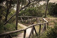 Houten weg in het pijnboomhout in uitstekend effect stock afbeelding