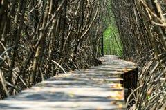 Houten weg langs het mangrovebos Royalty-vrije Stock Foto's
