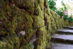 Houten weg, manier, spoor van planken in bospark, de achtergrond van het perspectiefbeeld royalty-vrije stock fotografie