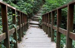 Houten weg, manier, spoor van planken in bospark, de achtergrond van het perspectiefbeeld stock afbeelding