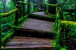 Houten weg met mos in bos royalty-vrije stock afbeeldingen