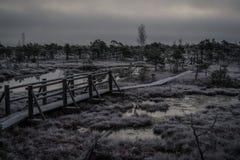 Houten weg, weg in moeras op vroege de winterochtend Stock Fotografie