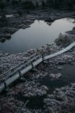 Houten weg, weg in moeras op vroege de winterochtend Royalty-vrije Stock Foto