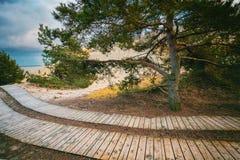 Houten wegen in het park Stock Foto