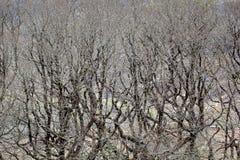 Houten wildernis Stock Foto