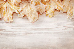 Houten Witte Bladeren Als achtergrond, Autumn Wooden Grain Board Texture Royalty-vrije Stock Foto
