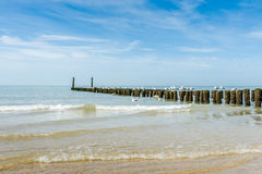 Houtgolfbrekers op het strand bij de Noordzee Stock Fotografie